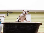View larger image of Dog bathing at ALL ABOUT RELAXING RV PARK image #10