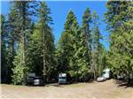 View larger image of RV sites under large trees at THE HEMLOCKS RV AND LODGING image #5