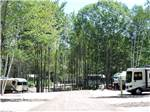 View larger image of Road lined with RV sites and trees at SANDY PINES CAMPGROUND image #3