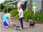 View larger image of Lady walking dogs at SCENIC RV RESORT image #5