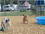 View larger image of Dog exercise area at BREEZY OAKS RV PARK image #3