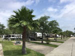 View larger image of RVs parked in sites with palm trees at LAGOONS RV RESORT image #2