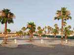View larger image of View of vacant sites with palm trees at SHADY HAVEN RV PARK image #4
