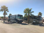 View larger image of RVs parked in paved sites with palm trees at SHADY HAVEN RV PARK image #5