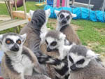 View larger image of A gaggle of small furry amimals at SHARK TOOTH RV RANCH image #8