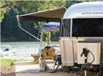 View larger image of A dog sitting under an awning next to the water at TWIN CREEKS RV RESORT image #3