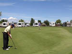 View larger image of Men golfing on a beautiful day at DEER PARK RV RESORT image #10