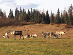 View larger image of Antelope grazing at DIAMOND M RANCH RESORT image #6