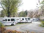 View larger image of RVs parked at campground at J  J RV PARK image #6