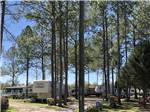 View larger image of RVs parked under tall trees at LAKE CITY RV RESORT image #5
