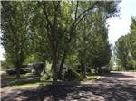 View larger image of Paved road and tree shaded sites at UNCOMPAHGRE RIVER ADULT RV PARK image #4