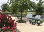 View larger image of A tree and some round picnic tables at THE CREEKS GOLF  RV RESORT image #1