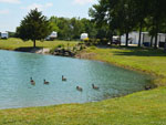 View larger image of Ducks on the water at RUTLADER OUTPOST RV PARK image #4