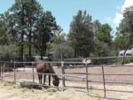 View larger image of Horse grazing at PAYSON CAMPGROUND AND RV RESORT image #12