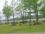 View larger image of Lush green lawn with picnic tables and a large number of white trailers in the background at BRUNSWICK BEACHES CAMPING RESORT image #11