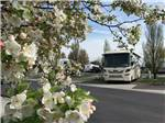 View larger image of Aerial view of RVs and trailers parked along paved road at HORN RAPIDS RV RESORT image #1