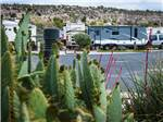 View larger image of Trailers and RVs camping at DISTANT DRUMS RV RESORT image #4