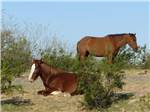 View larger image of Mountains surrounding the golf course at EAGLE VIEW RV RESORT ASAH GWEH OOU-O AT FORT MCDOWELL image #6