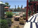 View larger image of Landscaping around the pool at EAGLE VIEW RV RESORT AT FORT MCDOWELL image #11