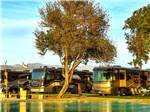 View larger image of Row of big rigs in golden sunlight at SHADOW HILLS RV RESORT image #3