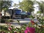 View larger image of A row of Motorhomes in campsites at MAJESTIC OAKS RV RESORT image #2