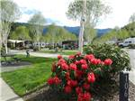 View larger image of RVs and trailers at campground at SEVEN FEATHERS RV RESORT image #3