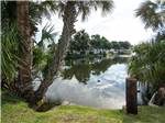 View larger image of ELLENTON GARDENS RV RESORT at ELLENTON FL image #3