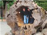 View larger image of A coulpe standing inside of a fallen tree at ANCIENT REDWOODS RV PARK image #7