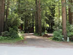 View larger image of Gravel RV site under redwood trees at RAMBLIN REDWOODS CAMPGROUND image #1