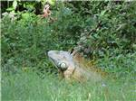 View larger image of Boats on the water at THE GLADES RV RESORT image #8