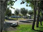 View larger image of RVs and trailers at campground at LAKE MINDEN RV RESORT image #6