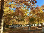 View larger image of Trailers camping at CALISTOGA RV PARK image #6