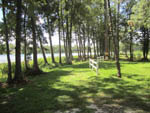 View larger image of A row of trees and sections of fence at LAKE WALDENA RESORT image #5