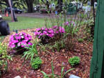 View larger image of A garden bed with purple flowers at LAKE WALDENA RESORT image #9