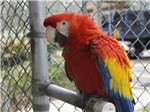 View larger image of Colorful Parrot at TRAVELERS CAMPGROUND image #9