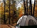 View larger image of A tent in a wooded area at CRAZY HORSE FAMILY CAMPGROUND image #6