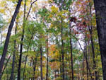 View larger image of Forested area with fall colored foliage  at BULL RUN REGIONAL PARK image #2