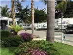 View larger image of RVs and trailers parked at RV park at PISMO COAST VILLAGE RV RESORT image #6