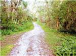 View larger image of Trail in the moss covered woods at SANLAN RV  GOLF RESORT image #3