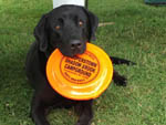 View larger image of Dog playing frisbee at COOPERSTOWN SHADOW BROOK CAMPGROUND image #6
