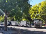 View larger image of An aerial view of the campsites at WAIIAKA RV PARK image #3