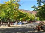 View larger image of Picnic tables at CANYONLANDS CAMPGROUND image #5