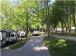 View larger image of Grassy area with pine trees with RVs in background at NORTHERN KY RV PARK image #6