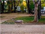 View larger image of Gift shop display of products at INDIAN CAMPGROUND  RV PARK image #5