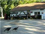 View larger image of Two turkeys walking by the office at INDIAN CAMPGROUND  RV PARK image #7