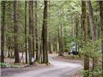 View larger image of Road leading into campground at RIP VAN WINKLE CAMPGROUNDS image #2