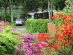 View larger image of Motorhome parked near silver SUV in woods at HARMONY LAKESIDE RV PARK  DELUXE CABINS image #1