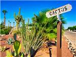 View larger image of CARAVAN OASIS RV RESORT at YUMA AZ image #1