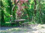 View larger image of SANTA CRUZ RANCH RV RESORT at SCOTTS VALLEY CA image #2