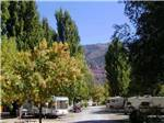 View larger image of Looking down the road at tree lined RV sites at ALPEN ROSE RV PARK image #4